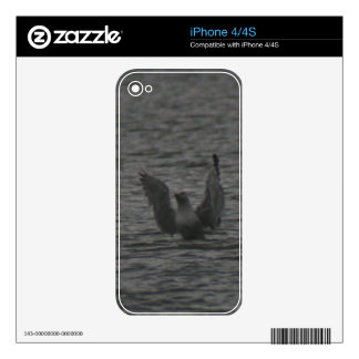 Dancing Seagull Decal For iPhone 4