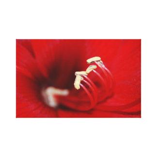 Dancing stamen of red flower macro canvas print