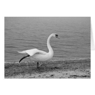 Dancing swan card