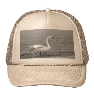 Dancing swan hats