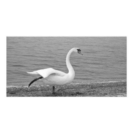 Dancing swan photo greeting card