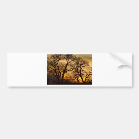 Dancing Trees Golden Sunset Bumper Sticker