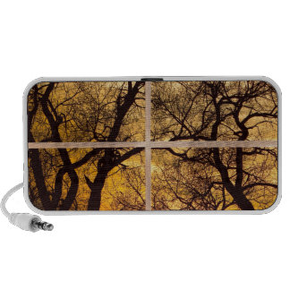 Dancing_Trees_Sunset_Picture_Window_Frame Photo_Ar Mp3 Altavoz
