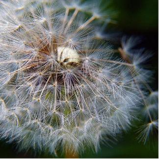 dandeliion adorno fotoescultura