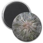 Dandelion 2 Inch Round Magnet