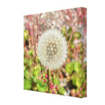 Dandelion- A Wish for You Canvas Print