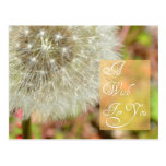 Dandelion- A Wish for You Post Card