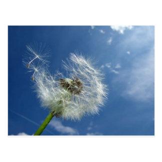Dandelion and blue sky postcard