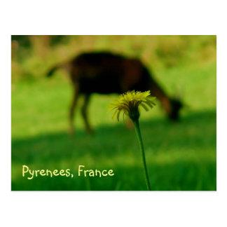 Dandelion and Goat Postcard