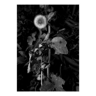Dandelion and the Seeds Poster
