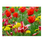 Dandelion and Tulip Meadow Postcard