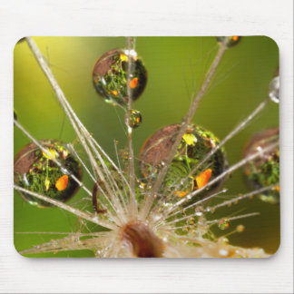 Dandelion And Water Droplets Mouse Pad