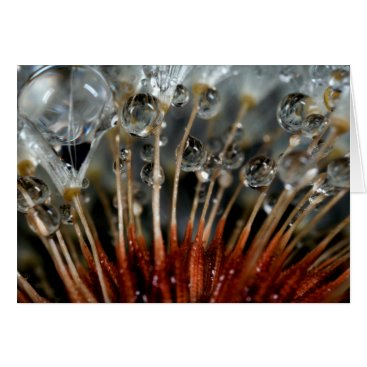 USA Themed Dandelion and water drops, CA Card
