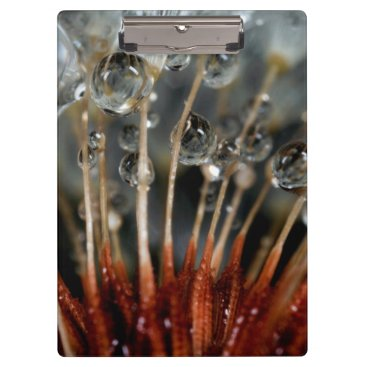 USA Themed Dandelion and water drops, CA Clipboard
