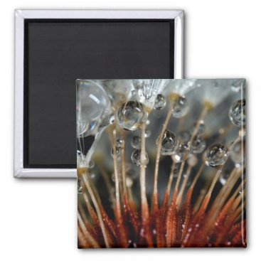 USA Themed Dandelion and water drops, CA Magnet