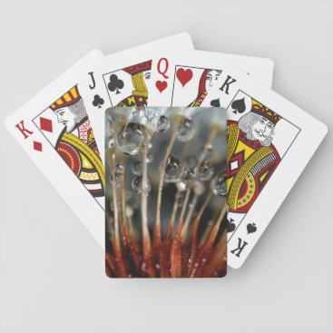 USA Themed Dandelion and water drops, CA Playing Cards