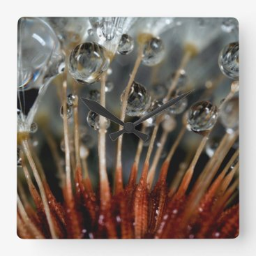 USA Themed Dandelion and water drops, CA Square Wall Clock