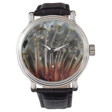 USA Themed Dandelion and water drops, CA Watch
