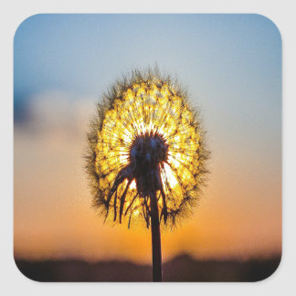 Dandelion at Sunrise Square Sticker