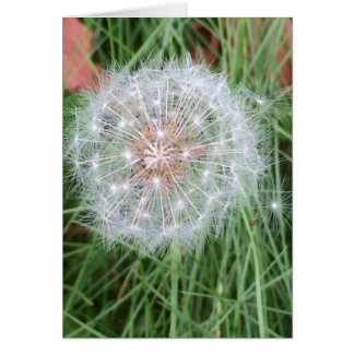Dandelion Birthday card