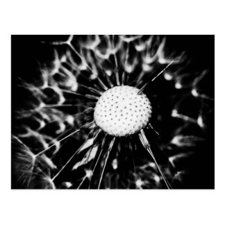 dandelion blacq postcard