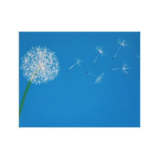 Dandelion Blowing in the Wind Canvas Print