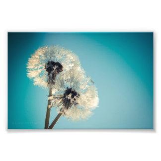 Dandelion Blue Sky Photo Print