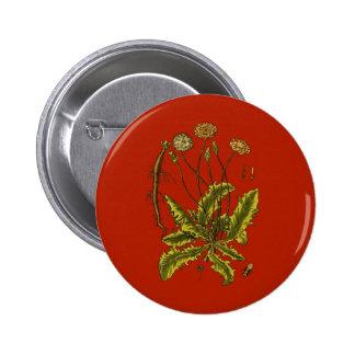 Dandelion Botanical Illustration Pinback Buttons