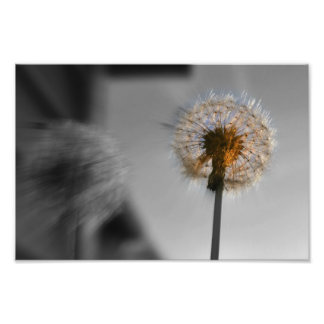 Dandelion Burst Photo Print