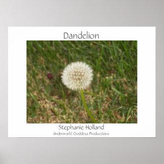 Dandelion by Stephanie Holland Poster