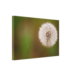 Dandelion Stretched Canvas Print