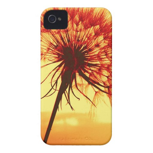dandelion blackberry bold covers