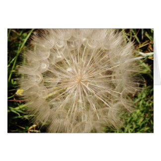 Dandelion Clock Close-Up Stationery Note Card