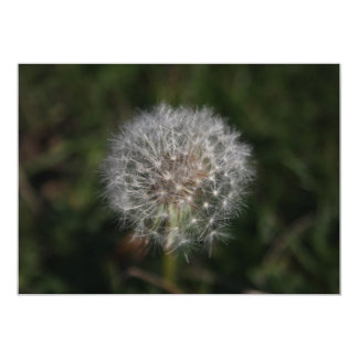 Dandelion Clock Flower Invitation