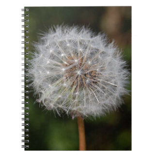 Dandelion Clock / Fluffy Parachutes Notebook