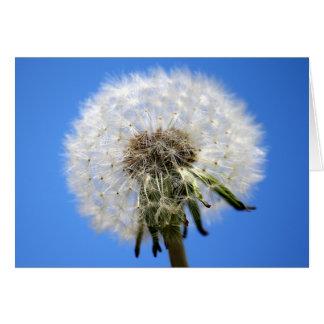 Dandelion Clocks White Flower Card