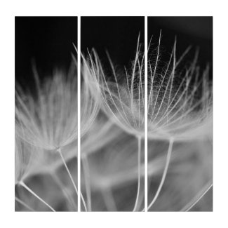 Dandelion Closeup in Black White Triptych