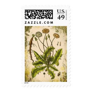 Dandelion Collage Postage Stamps