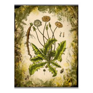 Dandelion Collage Postcard