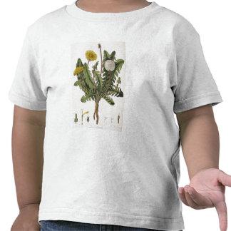 Dandelion (colour engraving) tshirts