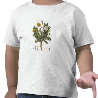 Dandelion (colour engraving) t shirt