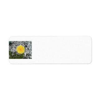 Dandelion Custom Return Address Labels