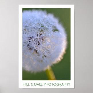 """Dandelion Dawn"" Photography Poster"
