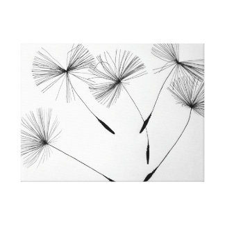 Dandelion Drawing Canvas