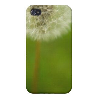 Dandelion Dreams iPhone 4 Cases