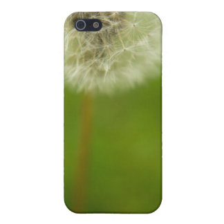 Dandelion Dreams iPhone SE/5/5s Cover