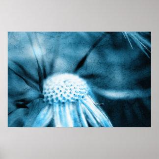 Dandelion especie - Pusteblume arte 2012 007 Póster