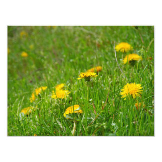 Dandelion Field Photo-Print Photo Print