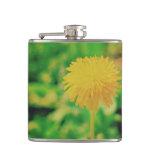 Dandelion Flasks
