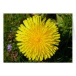 Dandelion flower card
